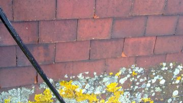 Fungicide and Lichens – why have your roof cleaned and what damage can these organisms inflict?