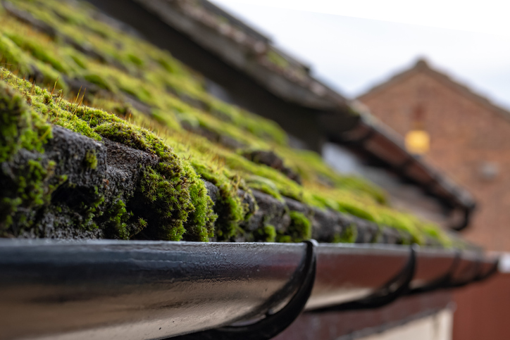What are the signs that a roof needs cleaning?